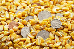 Cash Corn Crop. A pile of corn kernels with coins mixed in stock photo