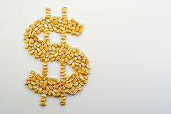 Cash Corn Crop III. A pile of corn kernels arranged into a dollar sign to reflect the high price of corn royalty free stock photo