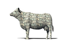 CASH COW ON WHITE Royalty Free Stock Photo