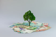 Cash growing tree. ,Represents the economic recovery stock photos
