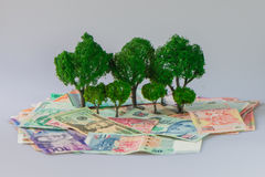 Cash growing tree. ,Represents the economic recovery stock images