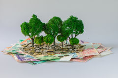 Cash growing tree. ,Represents the economic recovery royalty free stock images