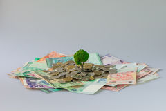 Cash growing tree. ,Represents the economic recovery royalty free stock photos