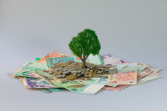 Cash growing tree. ,Represents the economic recovery royalty free stock image