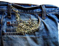 Cash Wearing Away. Shredded jeans with shredded money leaving the pocket Royalty Free Stock Photos