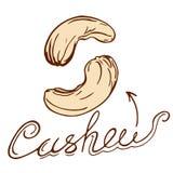 cashew Arkivbilder
