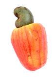 Cashew. Tropical Cashew fruits on white background stock photography
