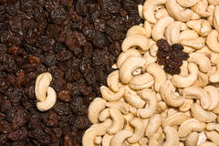 Cashew and black raisins Stock Images