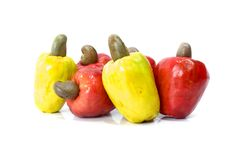 Cashew Fruit. Tropical Cashew Fruit on white background royalty free stock image