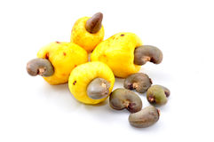 Cashew fruit Stock Images