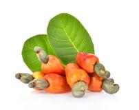 Cashew fruit isolated on white background.  royalty free stock image