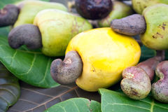Cashew fruit on leaves. Fresh cashew fruit containing the nut or seed laying on leaves stock images