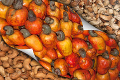 Cashew Fruit and Nuts. With page curl royalty free stock photos