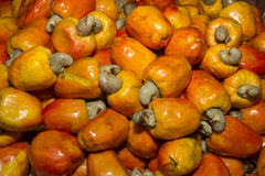 Cashew fruit. The cashew tree is a tropical evergreen tree that produces the cashew nut and the cashew apple stock photo