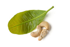 Cashew with leaves Stock Photo