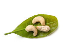 Cashew with leaves Stock Image