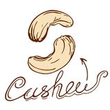 Cashew. Logo in retro style with a hand-drawn name in retro styles Stock Images