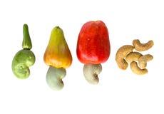 Cashew Nut Apple and Fresh Cashew Nut Stock Images