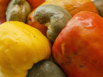 Cashew Nut Apple Royalty Free Stock Images
