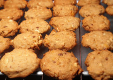Cashew nut cookies on steel grid Royalty Free Stock Images