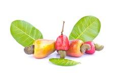Cashew nut fruit. On white background royalty free stock photos
