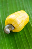 Cashew nut fruit on the green leaf Stock Photos