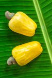 Cashew nut fruits on the green leaf Stock Photos