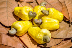 Cashew nut fruits on the leave� Royalty Free Stock Photos