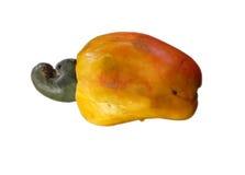 Cashew nut inside! Stock Images