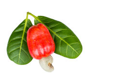 Cashew nut and leaf Royalty Free Stock Images