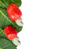 Cashew nut and leaf Stock Photo