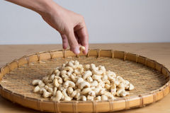 Cashew Nut  picked  by Hand selective focus. Cashew Nut  picked  by Hand Stock Photos