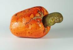 Cashew nut. Ripe fruit on a white background Royalty Free Stock Images