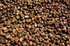 Cashew nut. Use for background Royalty Free Stock Image