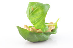 Cashew nuts in a basil leaf Stock Photos