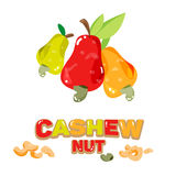 Cashew nuts fruit abnd seed with typographic design -  Stock Image