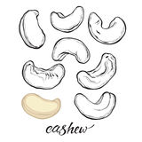 Cashew nuts isolated on white background. Vector set, elements  Royalty Free Stock Photos