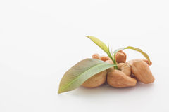 Cashew nuts with leaves on white background. Cashew Nuts With Leaves On White Background, selective focus Royalty Free Stock Photo