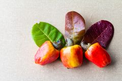 Cashews in textured background. The cashew tree is a tropical evergreen tree that produces the cashew seed and the cashew apple. It can grow as high as 14 m, but royalty free stock photos