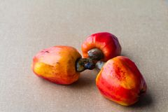 Cashews in textured background. The cashew tree is a tropical evergreen tree that produces the cashew seed and the cashew apple. It can grow as high as 14 m, but royalty free stock images