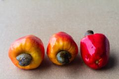 Cashews in textured background. The cashew tree is a tropical evergreen tree that produces the cashew seed and the cashew apple. It can grow as high as 14 m, but stock photo