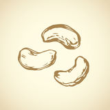 Cashew. Vector drawing Stock Image