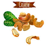 Cashew, watercolor illustration,   clipping path included Royalty Free Stock Photography