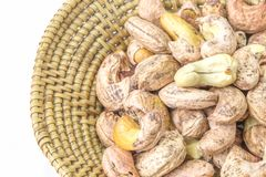 cashews Arkivbild