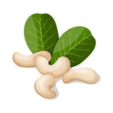 Cashews with leafs  on white. Stock Images