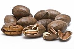 cashews som mycket isoleras Arkivbilder