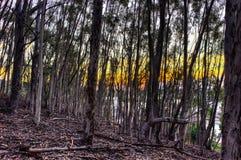 Casi a través del bosque Fotografía de archivo