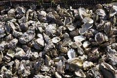 Casiers métalliques avec les huîtres vides de coquille Photographie stock libre de droits