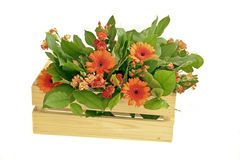 Casket with orange flowers Royalty Free Stock Images