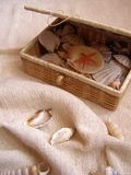 Casket with sea-shells. Photo of casket with shells Stock Images
